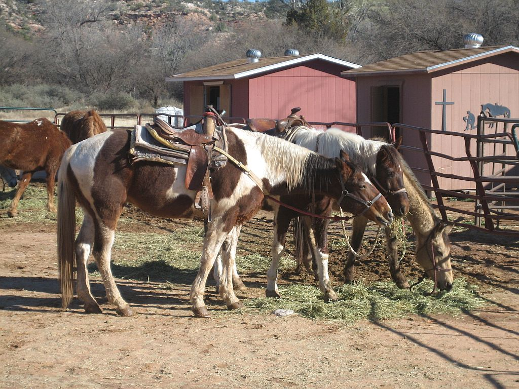 sedona-dead-horse-ranch-ride-1.jpg
