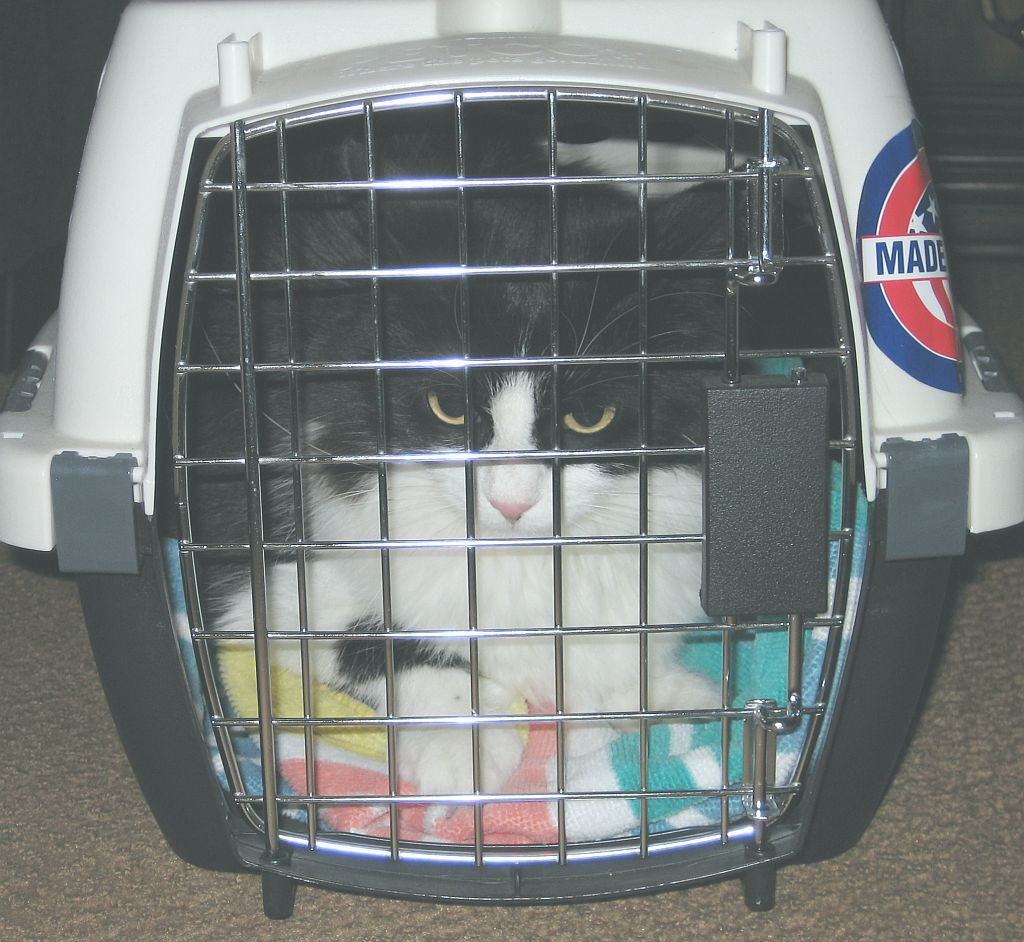 scout-in-her-carrier.jpg
