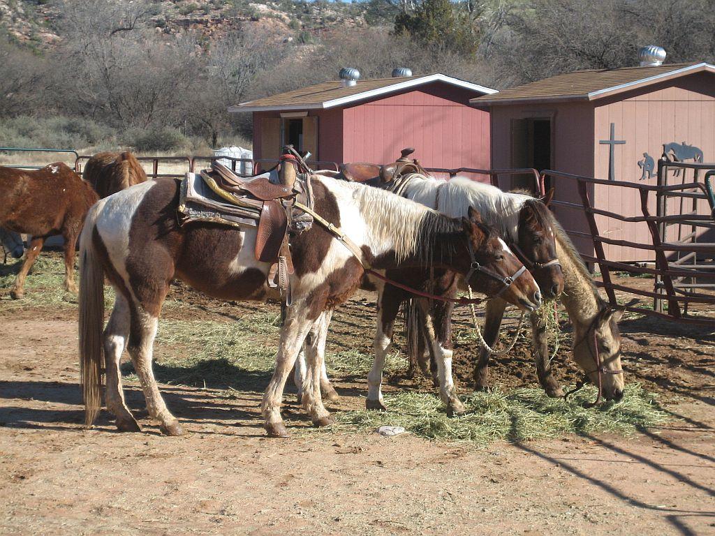 sedona-dead-horse-ranch-ride-1.jpg