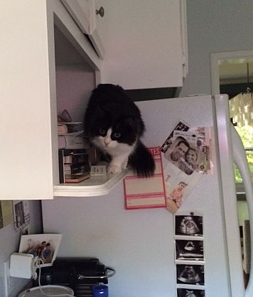 scout-on-the-pantry-shelf.jpg