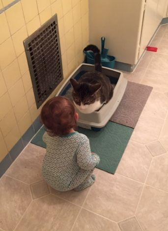 charlotte-and-fitz-in-the-litter-box.jpg